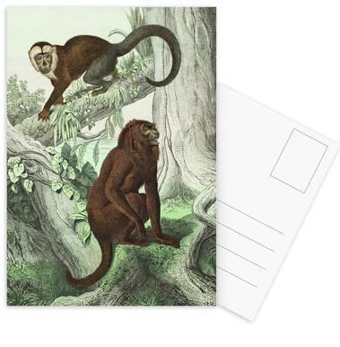 Affen 3 - Schubert -Postkartenset