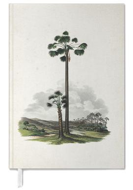 Mauritia Vinifera - Martius