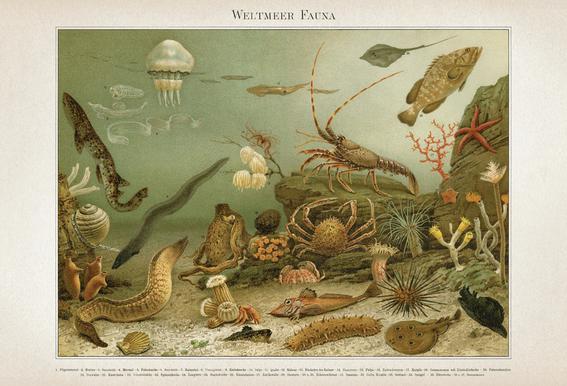 Weltmeer Fauna - Meyers