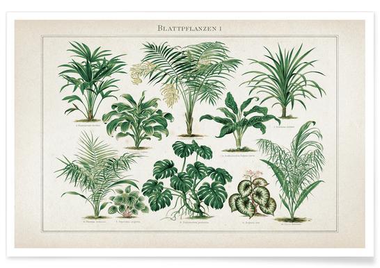 Blattpflanzen 1 - Meyers -Poster