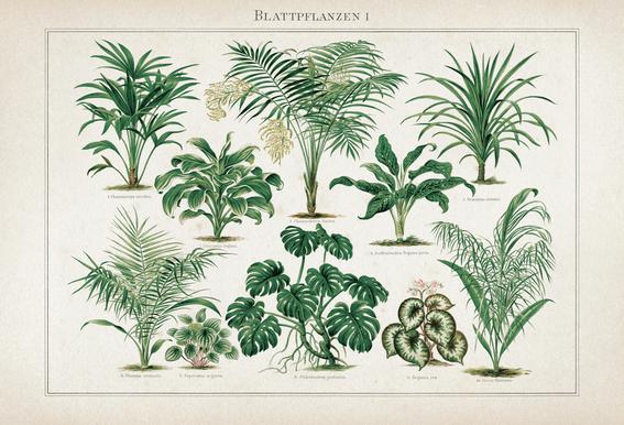 Blattpflanzen 1 - Meyers