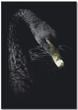 Dark Swan Notebook