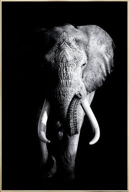 Dark Elephant Plakat i aluminiumsramme