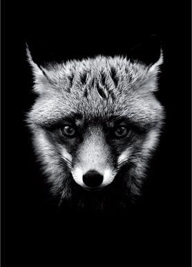 Dark Fox toile