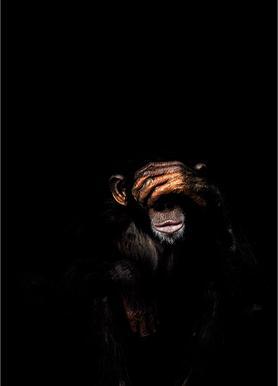 Monkey See No Evil canvas doek