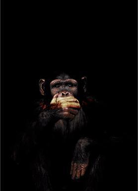 Monkey Speak No Evil toile