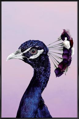 Purplish Peacock affiche encadrée