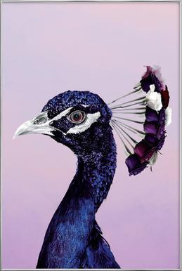 Purplish Peacock affiche sous cadre en aluminium