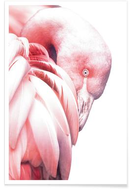White Flamingo affiche