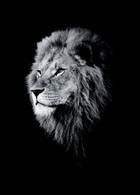 Dark Lion Head canvas doek