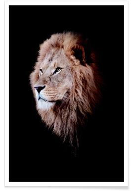 Dark Lion Head Colorized poster