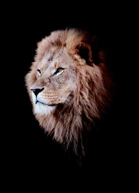 Dark Lion Head Colorized Canvas Print