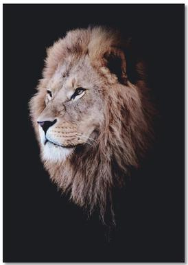 Dark Lion Head Colorized