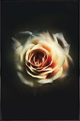 Faded Rose Framed Poster