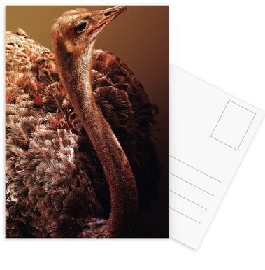 Ostrich -Postkartenset