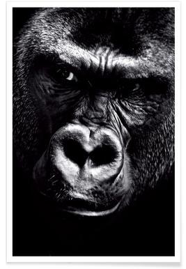 Dark Gorilla