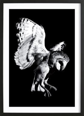 Barn Owl ingelijste print