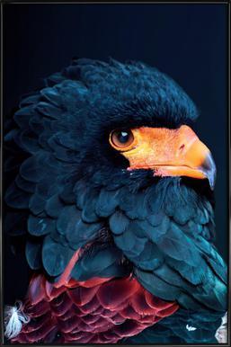 Bateleur Eagle Framed Poster