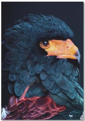 Bateleur Eagle notitieboekje