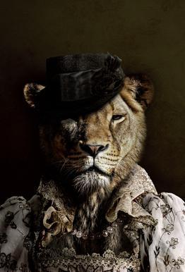 Classy Lioness acrylglas print
