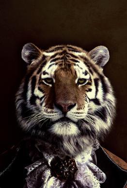 Classy Tiger 2 acrylglas print