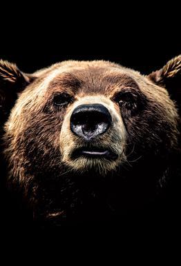 Dark Bear alu dibond