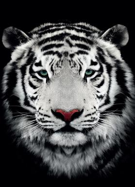 Dark Bengal Tiger canvas doek