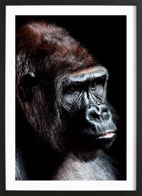Dark Gorilla Framed Print