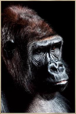 Dark Gorilla Poster in Aluminium Frame