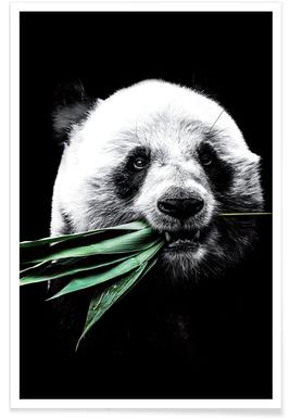 Dark Panda Poster