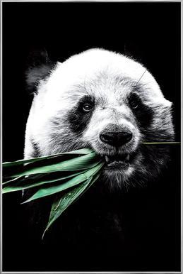 Dark Panda poster in aluminium lijst