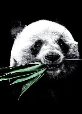 Dark Panda canvas doek
