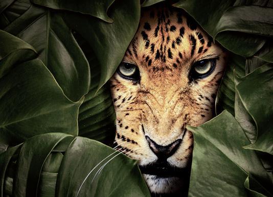 Jungle Leopard canvas doek