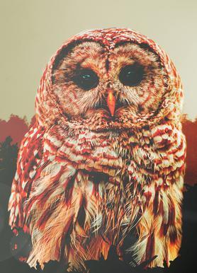 Owl 2 canvas doek