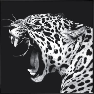 Roaring Jaguar ingelijste poster