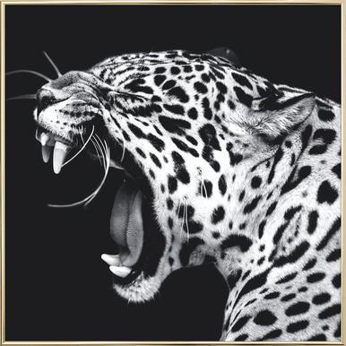 Roaring Jaguar poster in aluminium lijst