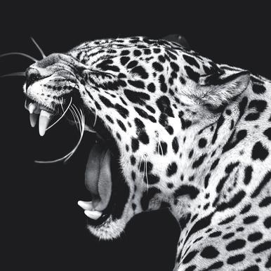 Roaring Jaguar canvas doek
