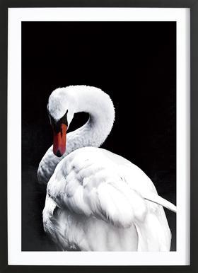 White Swan ingelijste print