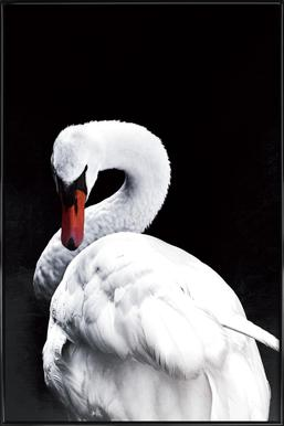 White Swan Poster i standardram