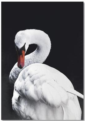 White Swan Notepad