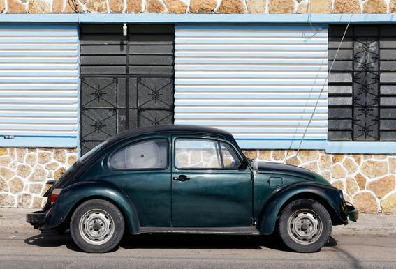 Mexican Beetle 10