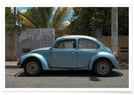 Mexican Beetle 17