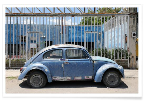 Mexican Beetle 2