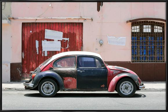 Mexican Beetle 5
