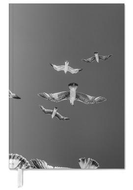 Soaring Birds agenda