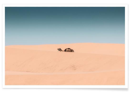 Lone Camel
