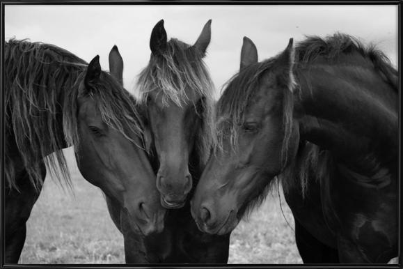 Black and White Horses Framed Poster