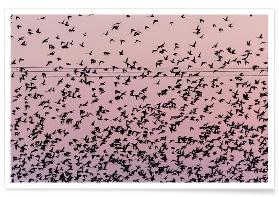 Chaos in Bird Migration by @matthcon01 -Poster