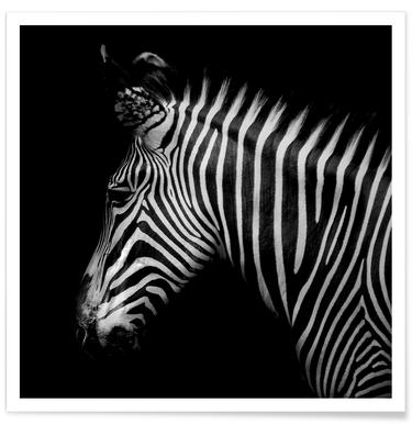 Zebra Profile by Lothare Dambreville -Poster
