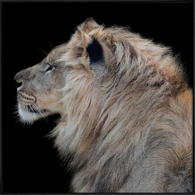 Lion Profile by Lothare Dambreville